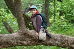 Boy in a tree Royalty Free Stock Photo
