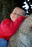 Boy in Tree. Young boy with red sweatshirt in tree Stock Image