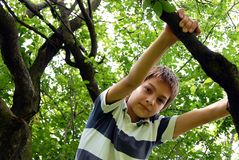 Boy on tree Stock Photo