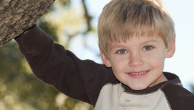 Boy in a tree Stock Photos