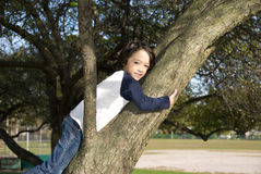 Boy in Tree Stock Photo