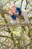 Boy in a tree Royalty Free Stock Images
