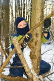 Boy in a tree. Boy climbs a tree in the winter forest Royalty Free Stock Photos