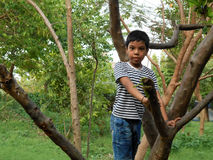 Boy and tree. Stock Images