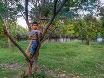 Boy on a tree. Stock Images