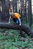 The boy on the tree Stock Photo