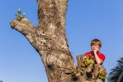 Boy Tree Future Stock Photo