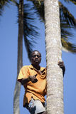 Boy on the tree, Kizimbani, Zanzibar, Tanzania Royalty Free Stock Photos