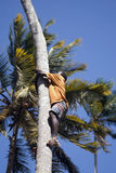 Boy on the tree, Kizimbani, Zanzibar, Tanzania Royalty Free Stock Image