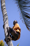 Boy on the tree, Kizimbani, Zanzibar, Tanzania stock photo