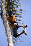 Boy on the tree, Kizimbani, Zanzibar, Tanzania Stock Photography