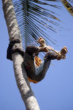 Boy on the tree, Kizimbani, Zanzibar, Tanzania Stock Images