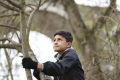 Boy among the trees Royalty Free Stock Photography