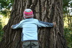 Boy trying to embrace huge old tree Stock Images