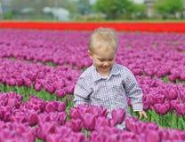Boy In Tulip Field Stock Photo