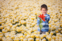 Boy in Tulip Field Stock Photo