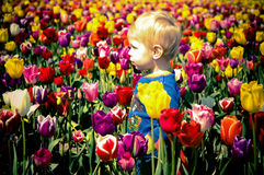 Boy and Tulips Royalty Free Stock Image
