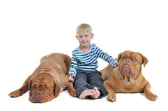 Boy with two dogs Stock Photo