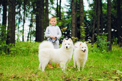 Boy with two Samoyeds Royalty Free Stock Photo