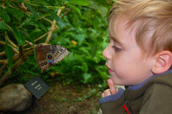 Boy with Butterfly stock photo