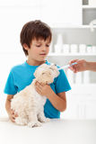 Boy at the veterinary doctor with his little doggy. Receiving medication Royalty Free Stock Photo