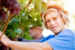 Boy in vineyard Stock Image