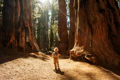Boy visit Sequoia national park in California, USA. Boy visit Sequoia national park in California. USA stock photo