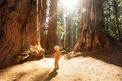 Boy visit Sequoia national park in California, USA. Boy visit Sequoia national park in California. USA royalty free stock images