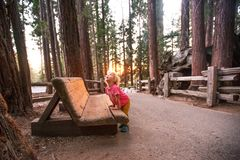 Boy visit Sequoia national park in California, USA. Boy visit Sequoia national park in California. USA stock images