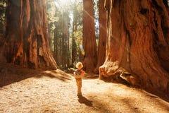 Boy visit Sequoia national park in California, USA.  stock photo