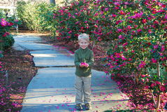 Boy with pink flowers. Boy in walk way surrounded by pink flowers and holding pink petals royalty free stock photography