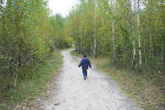 Boy walking along the road in the birch forest Royalty Free Stock Photography