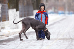 Boy walking with a big dog in winter park Royalty Free Stock Photos