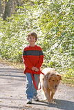 Boy Walking the Dog Royalty Free Stock Image