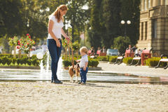 Boy is walking the dog. Little boy is walking the beagle dog with his mom stock photo