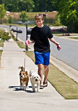 Boy Walking Dogs. A preteen aged boy walking two dogs on a sidewalk in a suburban neighborhood stock photo