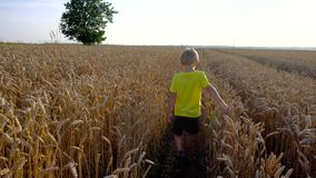 Boy walking in field stock video
