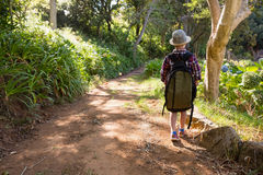 Boy walking in the forest. Rear view of boy walking in the forest Royalty Free Stock Photos