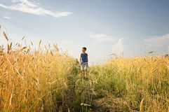 Boy walking through golden wheat field Stock Image