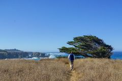 Boy walking near the ocean over a field next to cliffs and a tree stock image