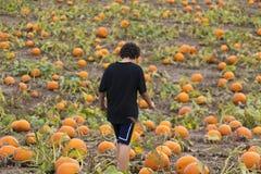 Boy walking through pumpkin patch field looking for Halloween pu Royalty Free Stock Photo