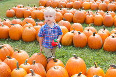 Boy Walking Between Rows of Large Pumpkins Stock Photo