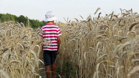 Boy walking on wheat field rear view stock video footage