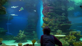 Boy watching on fish in a large aquarium. Young boy watching the underwater world in a large aquarium stock video footage