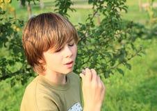 Boy watching a plum with warm. Little boy - kid watching a plum with a warm Royalty Free Stock Photography