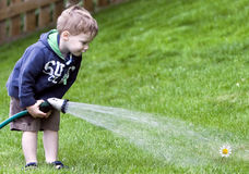 Boy watering flower Stock Photo