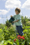 Boy Watering Flowers In Community Garden. Happy young boy watering flowers in community garden stock photography