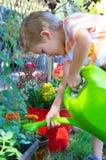 Boy Watering Flowers. Cute little Preschool aged boy watering flowers in a blooming garden Royalty Free Stock Photography