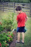 Boy Watering Flowers Stock Images