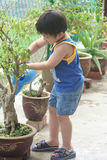 Boy watering the plant Stock Image